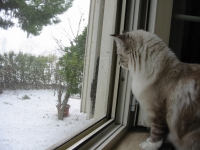 Shiny watching a snow fall for the first time ~ Feb.3-2012