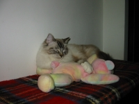 Shiny sleeping with his Teddy Pillow Pal ~ Mar.18-2012